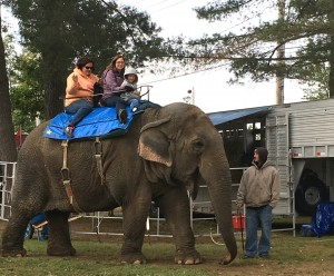 Kids as well as adults can go on the elephant ride at the Topsfield Fair, and more than one person can go at a time (Oct. 4, 2015).