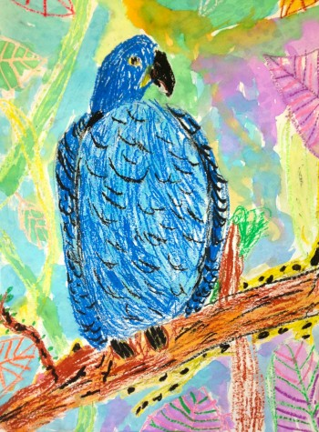 A hyacinth macaw by Hosmer second-grader Evey Long, one of the works to be displayed in the 2016 Watertown public schools art show that will run from April 1 to April 26 at Watertown Mall.