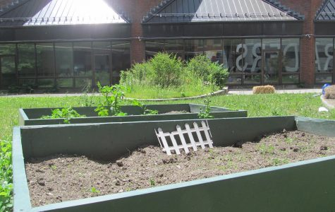 Potential for WHS courtyard gardens is growing
