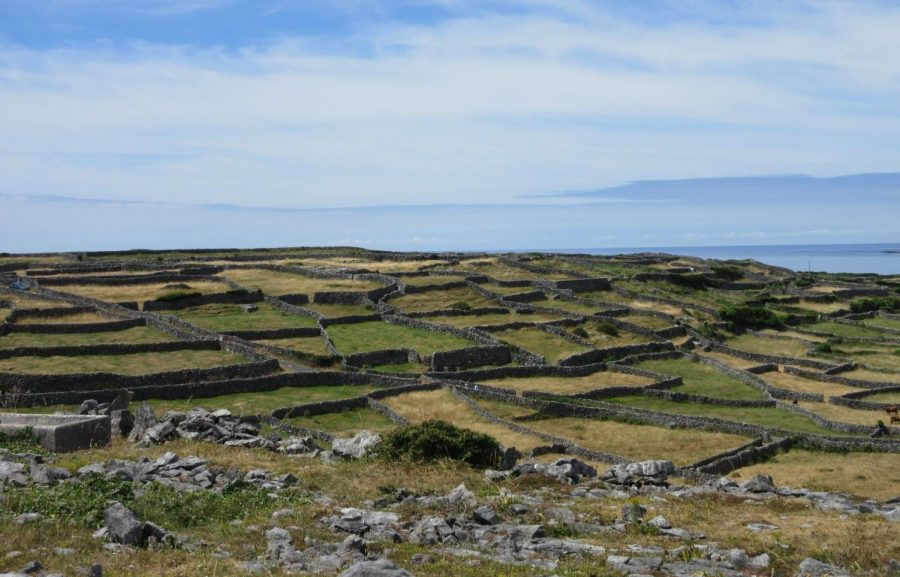 A view from a high spot on Inisheer. The whole place was covered in rock walls like these, each surrounding a tiny plot of land that seemed to contain nothing but grass. Some penned in cattle or horses but most, mysteriously, were empty.